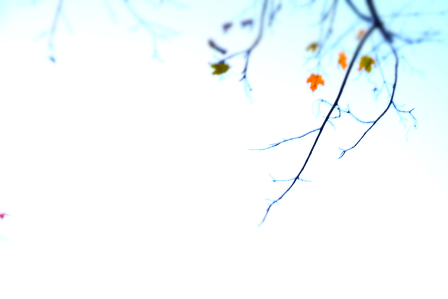 FALL, CONNECTICUT by Carine