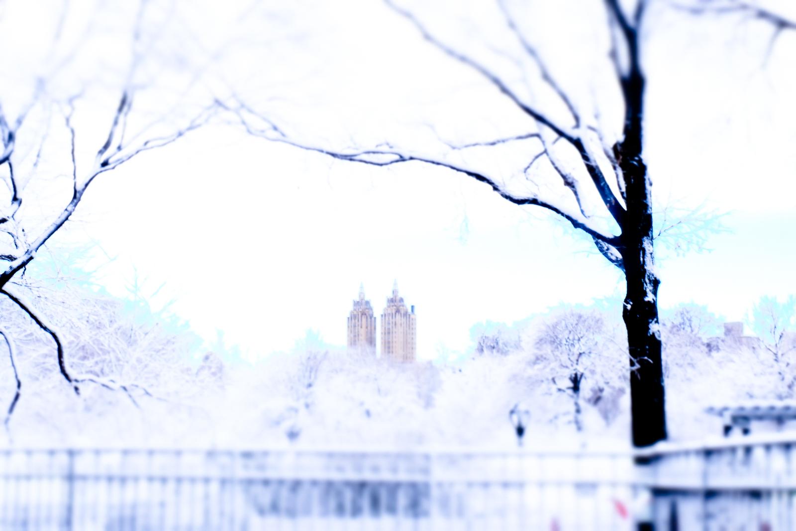 WHITE WINTER, NEW YORK by Carine