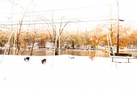 SNOW, CONNECTICUT by Carine