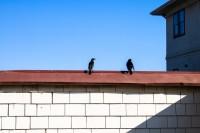 Birdy Num Num, San Francisco