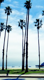 Palm trees, California