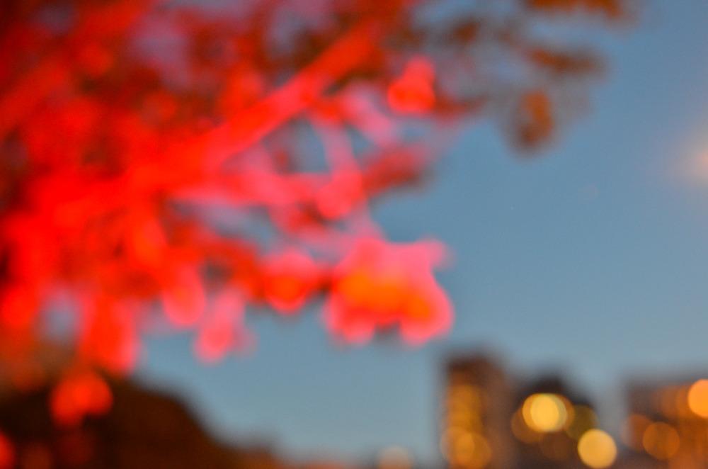 Red Light, San Francisco