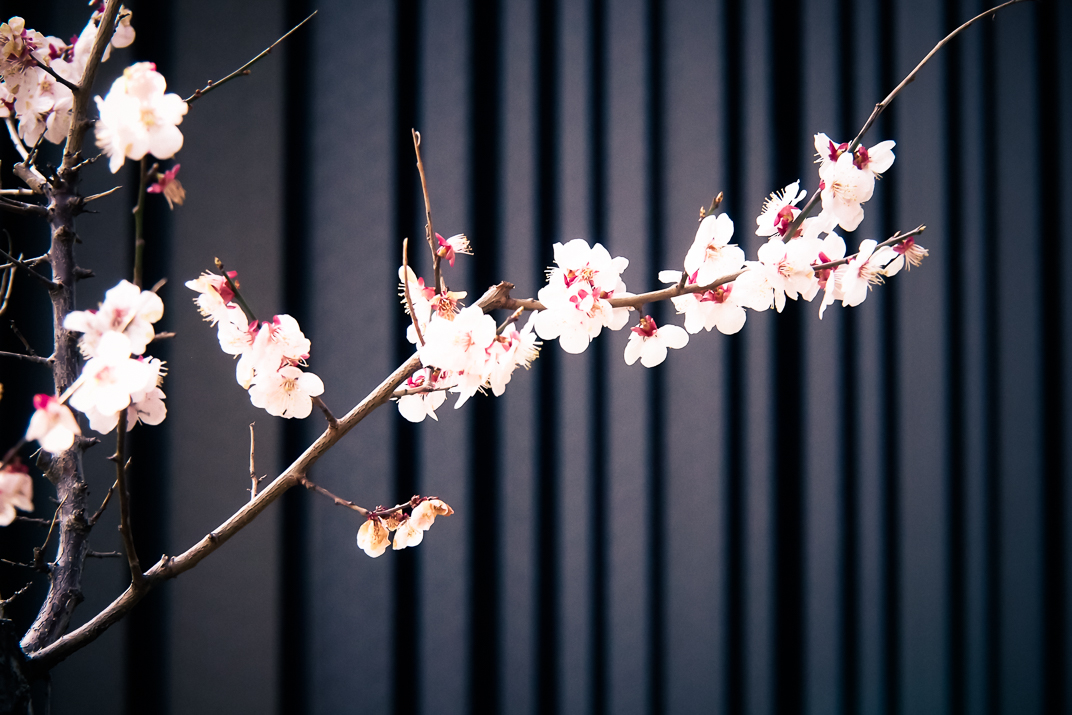 MEMORY of 2Filles2Villes in Tokyo by Carine
