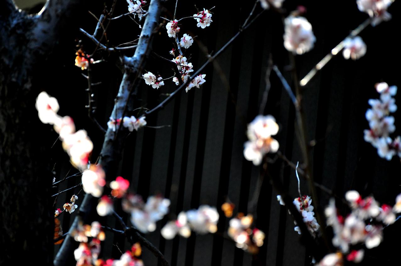 REMEMBER JAPAN! by Véronique