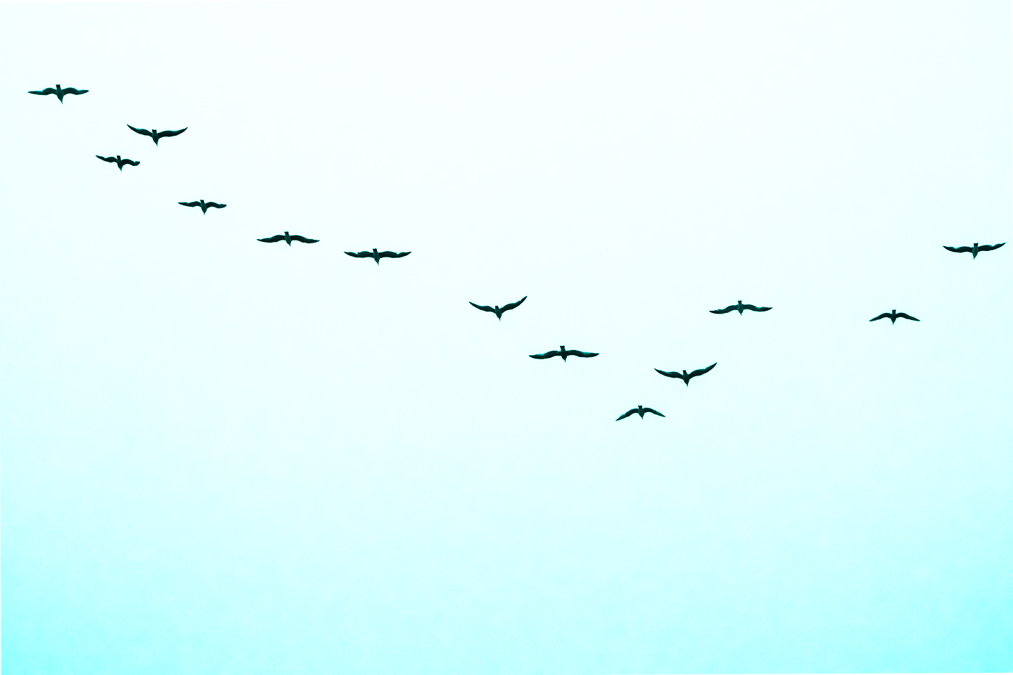 FLY AWAY by Carine