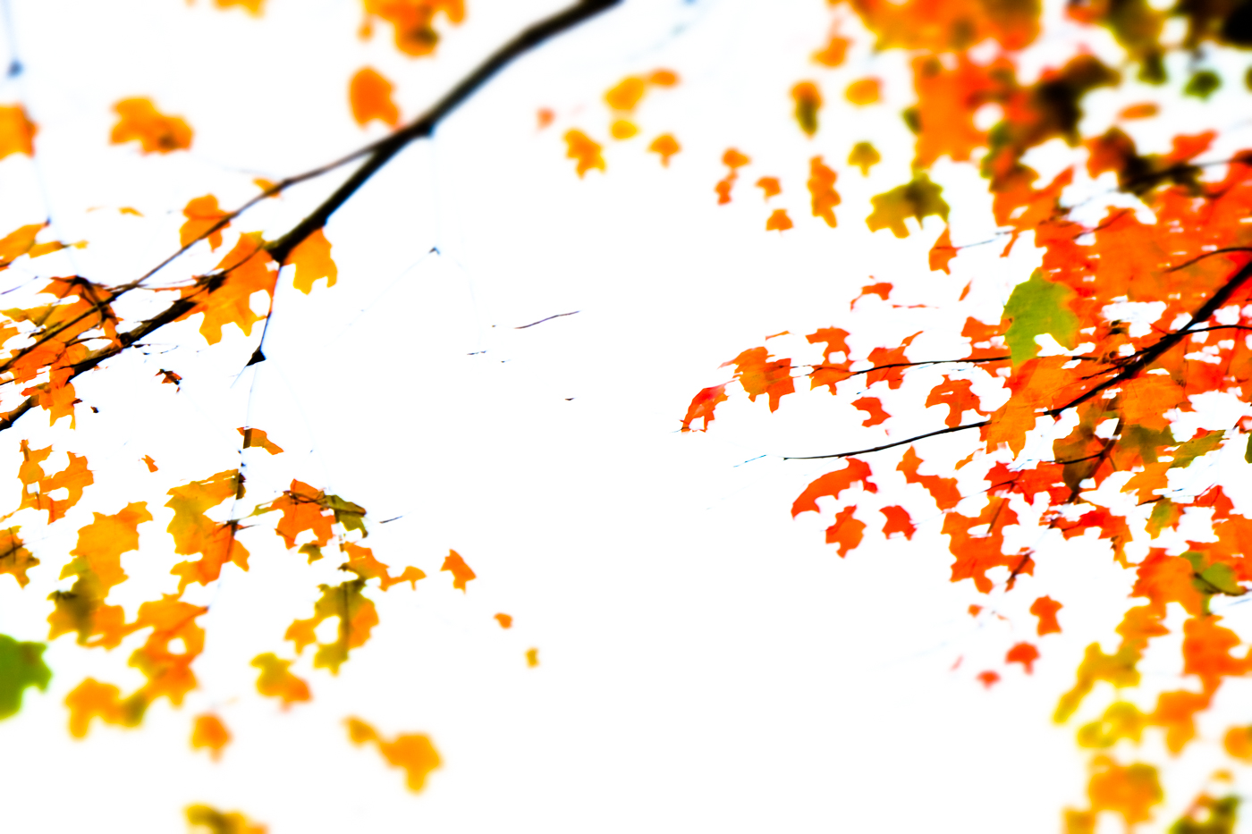 FALL and A NEW BABY by Carine